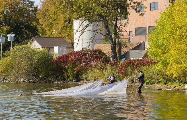 Aquatic biology students use nets to sample the population of species in Lake Bemidji along the BSU shore in October 2015.