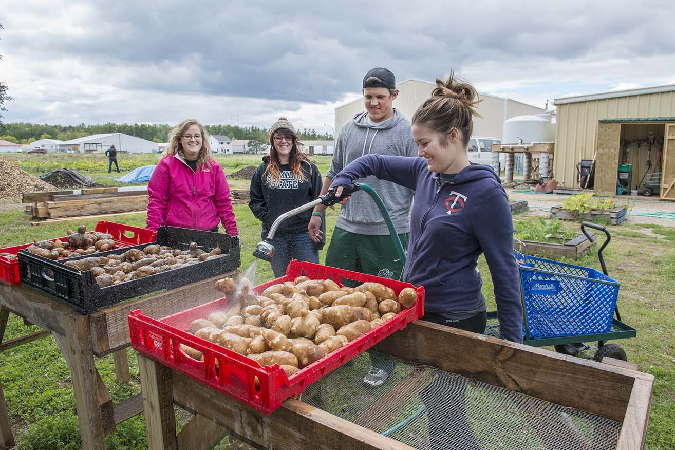 Students work in the garden at the Bemidji Community Food Shelf in September 2014 as part of a sociology course on social movements.