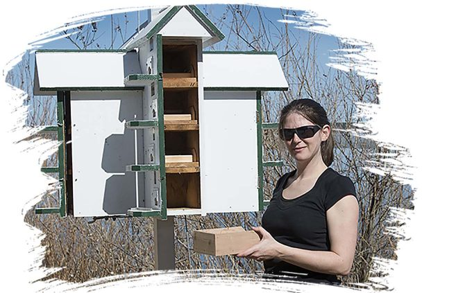 BSU graduate student Cathy Henry prepares martin houses in April 2015.
