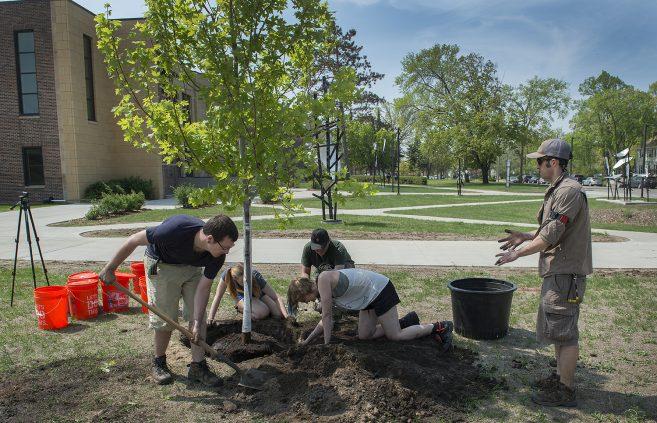 Jacob Haley, Anna Haynes, Skye Iwanski, Jordan Lutz and Benjamin Ng planting an Autumn blaze.