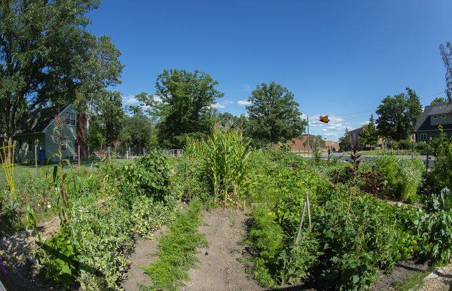 BSU's Gitigaan Garden